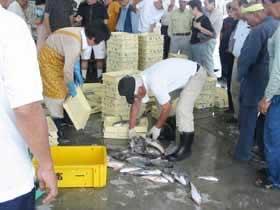 四日市市漁業協同組合(富洲原支所)