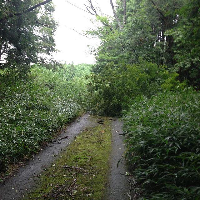 台風12号の影響が出てます、畑に行くにも道が倒木を...