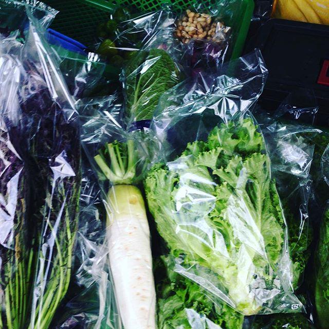 今日の2便目は、大根、白菜、からし菜、ピーナッツ、...