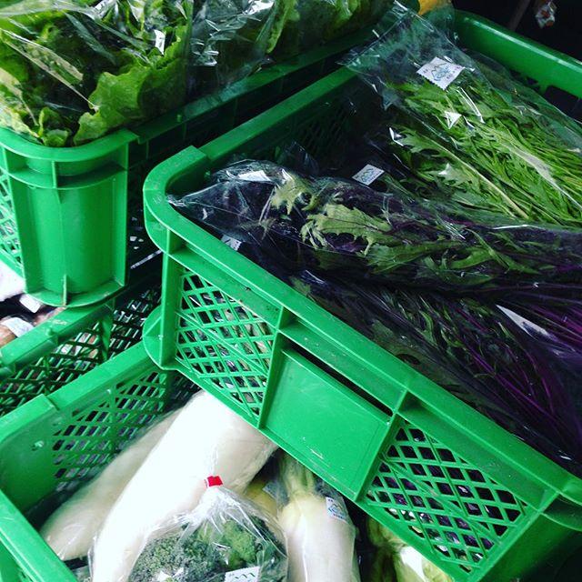 朝一に収穫して今日から新年最初の出荷です!ダイコン、レタス、水菜、サツマイモ、キャベツ、ブロコリー、里芋、ヤーコン、ドライフルーツを出荷です!