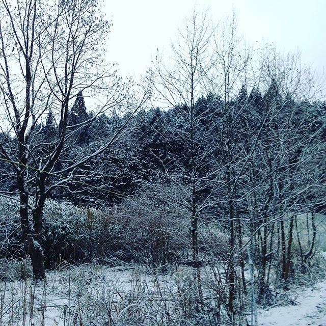 今日も朝から雪ですね〜