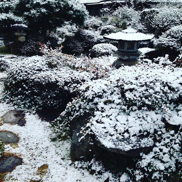 うちの庭も雪化粧してます 想定通りの畑は、収穫できないので、昨日の夜に収穫は正解だったようですね!今日も、お安く出せそうですよ!