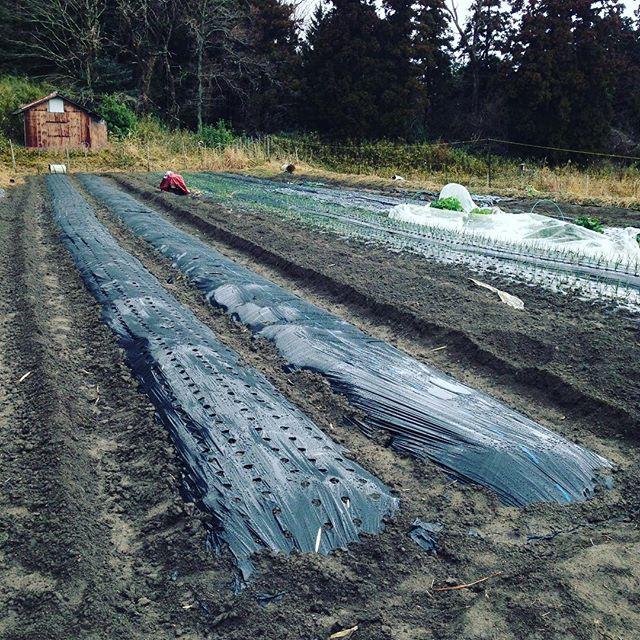 今日は晴れるかなぁ〜と、期待してましたが準備中の畑は土が柔らかいので様子見状況ですね〜ふかふかの、ショートケーキを作る感じに似てる 笑