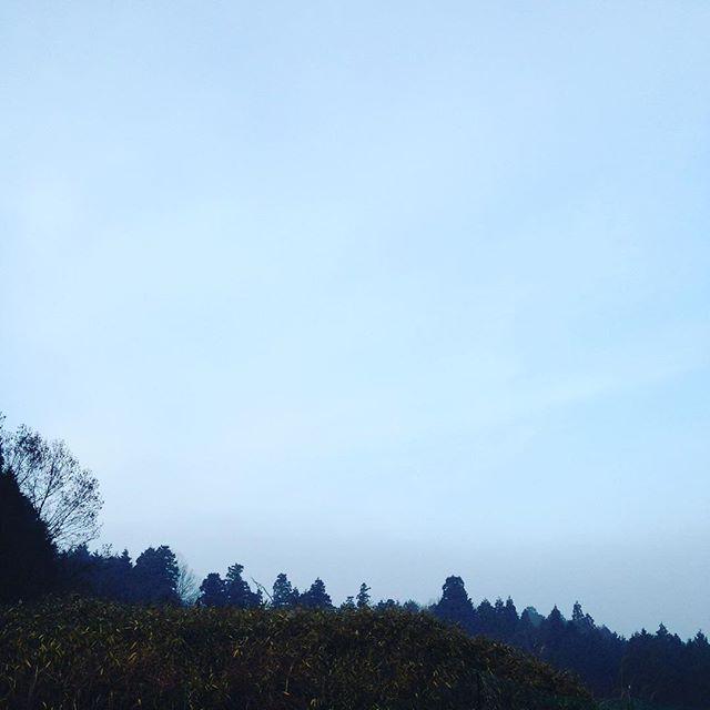 朝から濃霧注意報出てます、少し視界も良くなって来てます。木々からギャーギャーと鳥の声が聞こえてます!この鳴き声の鳥は、ブロコリーとか食べますね!さて鳥の名前は、何でしょう?笑