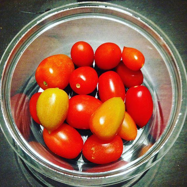 アイコと言う品種のトマトで、うちでは、夏に出荷してた種から土を作り栽培して、少しずつトマトコーナーに置いてます!栽培数が少ないので、見つけたらご賞味下さいね!今後、より甘いトマトの開発します!