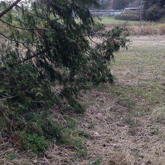 木まで、倒れてますね〜チェンソー持って来ないと 苦笑