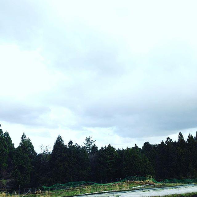 雲の隙間から青空が見えたり見えなかったりで、風が冬です!今年は、日照不足に注意したい感じです!