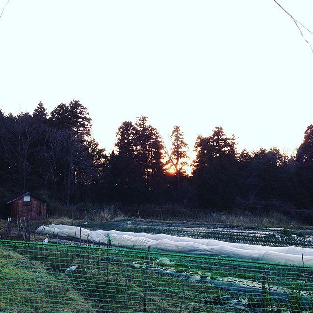 サラダ玉ねぎ、ダイコン、キャベツ、ブロッコリー、カリフラワーなど収穫 明日、朝出荷します!今日も朝から霜が降りるので、暫く管理が難しい時期です!日中は、暖かく春らしいですね〜