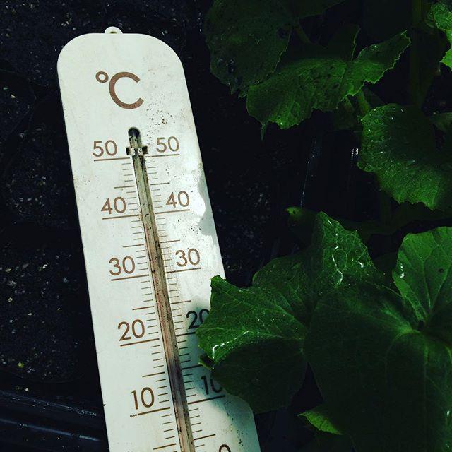 今日は、朝は霧でしたが、春?初夏ですね〜一気暑い!あと、1回位寒気が、来て夏体に模様変えです!温度管理が大切な時期に入ってます!今日も朝から出荷しました!様子みながら、2回出荷になってきます!
