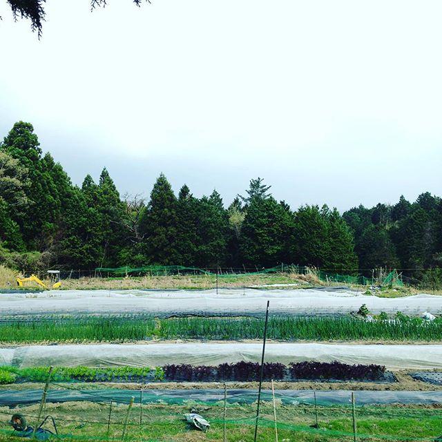 昨日は、暑く今日は風が強くどんよりな天気です!あと6反で、作物が、全て入ります!