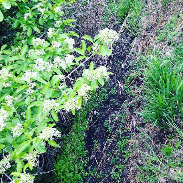 ワラビ、うど、たらの芽など、放置しますが、ちゃんと2.3月に、草刈りや野焼きして管理してます