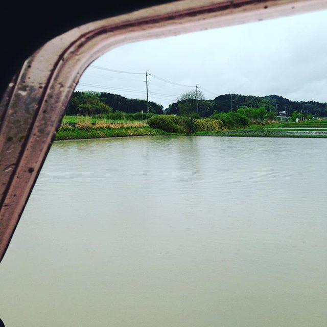 今日は、水田の中を走り回って土を更に細かくします!
