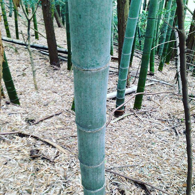 1.この竹は、何年?