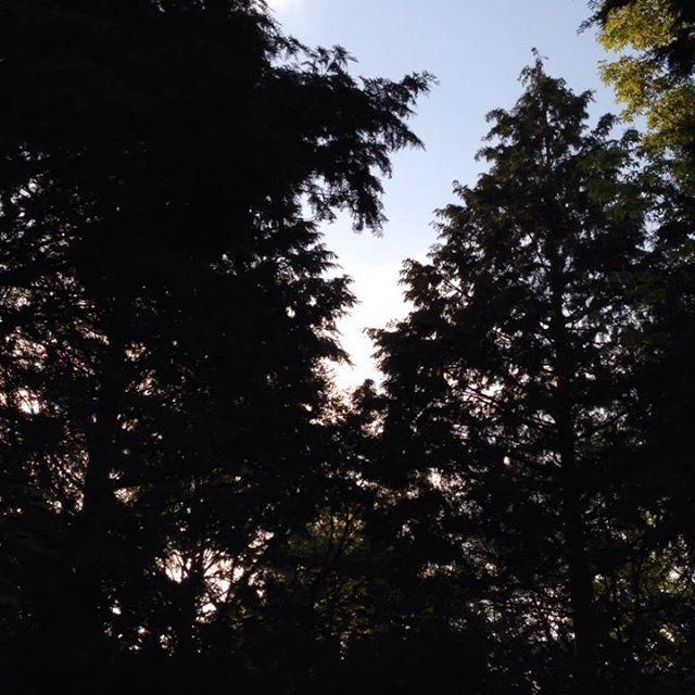 あいうえお農園の森の風景