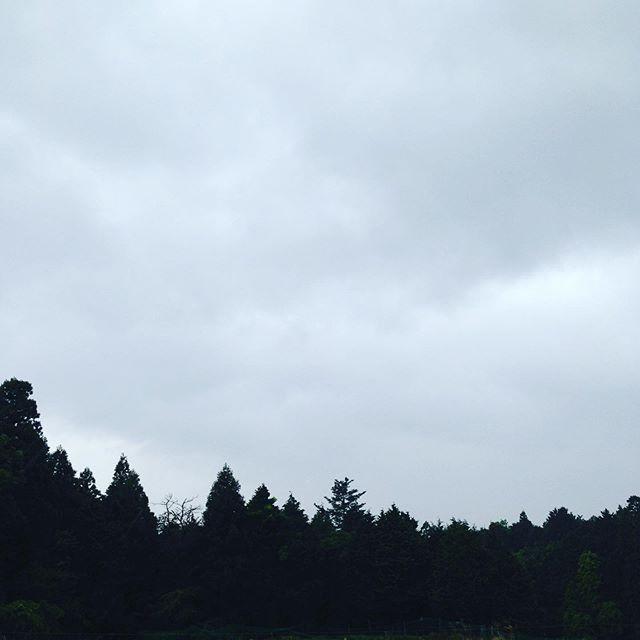 横殴りの雨が降ってきました!露地収穫中断