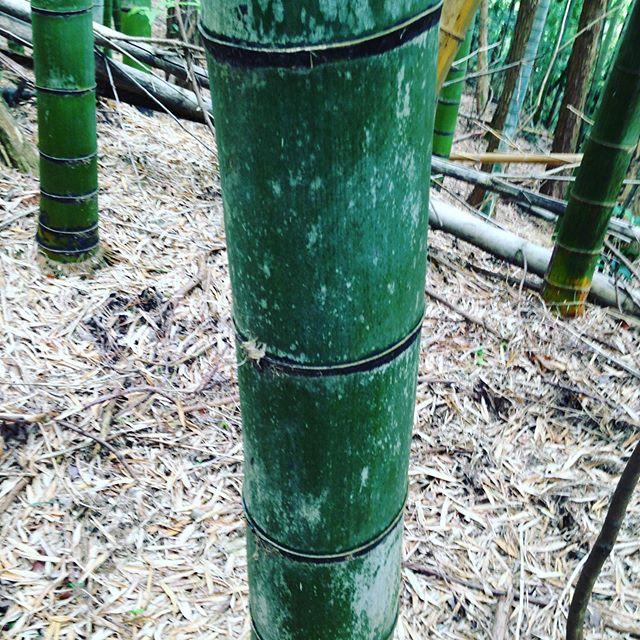 2.この竹は、何年?