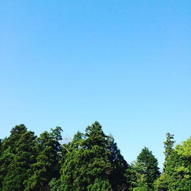 おはようございます!今日は朝10℃から一気に気温が、上がって暑くなりそうです!お野菜、タケノコと2便収穫出荷します!10時前後と13時前後です!