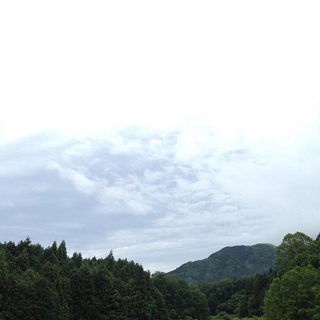 雨は、止んで気温15℃の朝です!土が水分をしっかり含んでますので収穫可能な場所のみになりますね