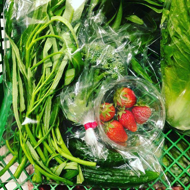 今日のお宝は、イチゴ、空芯菜、キュウリ、ブロッコリー!見つけてね!