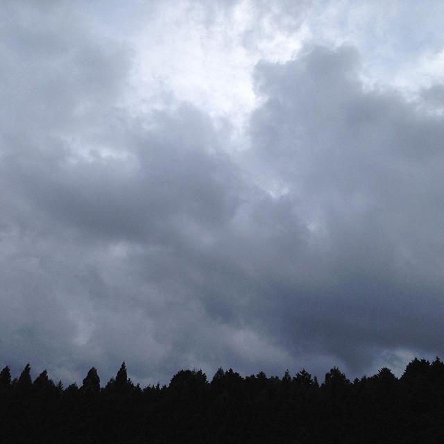 朝から雨が降ってます!気温16℃畑は湿ってます。