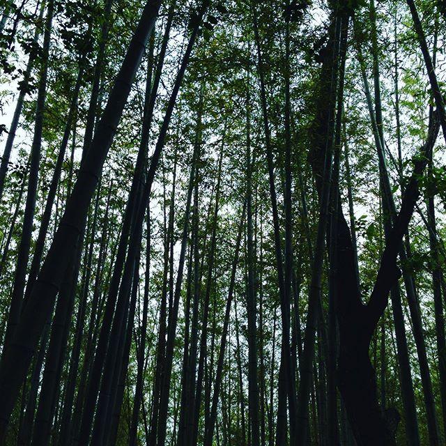 予報通り雨が降ってます!徐々に雨足や風も強いため収穫中断です!タケノコも少し竹採りました!
