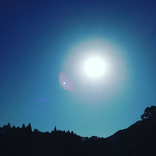 気温が上がり一気に真夏になった感じの天気です!昨年の猛暑を思い出します。本日もたくさん収穫してます