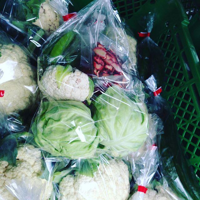 今日は、お野菜セット宝探し!見つけてね!