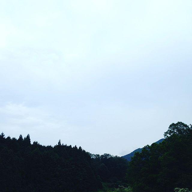 雨が降り出しました、収穫出荷は毎日でしたが、いよいよ梅雨入りですね〜