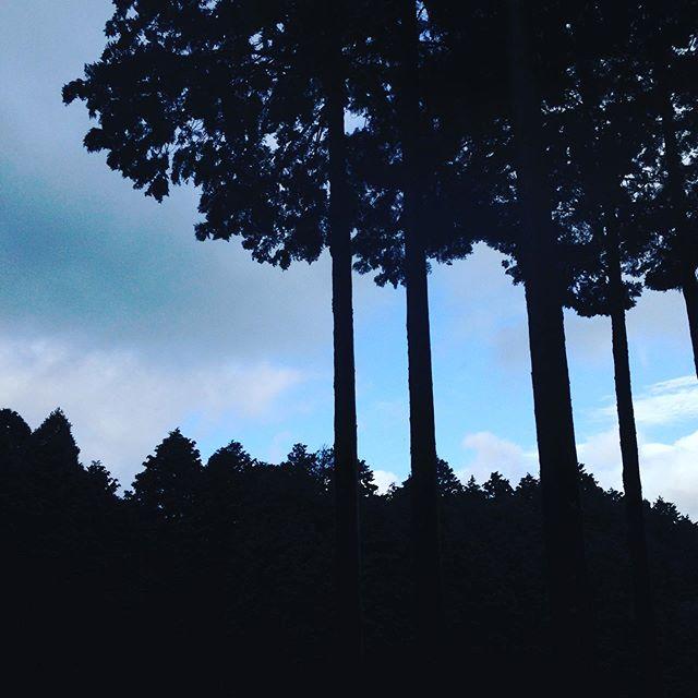 台風前の青い空が、チラチラ!素早く収穫してます
