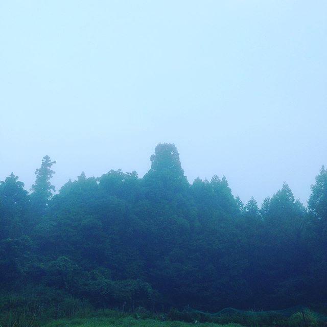 霧の発生であたりは、真っ白な朝一採りしてます。