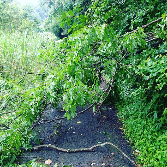 雨が続くと倒木も増えます。道路復旧作業をして出荷出荷します!