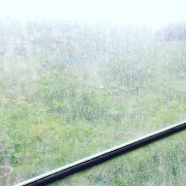 雨が強くなってきましたが、苗木をひたすら作ってます!