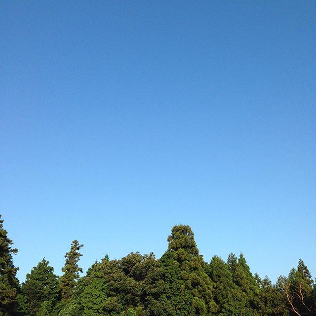 気温の変化が、ある朝の空気がひんやりとしてる朝です。昨晩は雨で土が湿って秋は、もう間も無く深まり始める感じ 今日も順調です