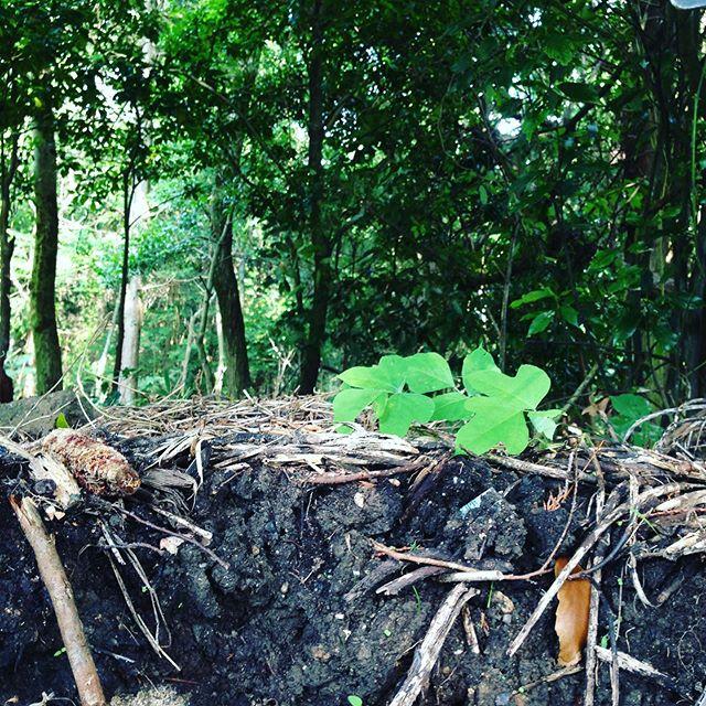 森の中で作られる腐葉土を中心にブレンドされてます。水は、地名通り天然の湧き水で、来られたかたは、皆さん感動して下さいます。