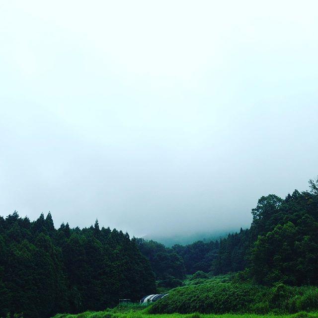朝から落雷と雨が降ってます!激しくならないタイミングで収穫してます。