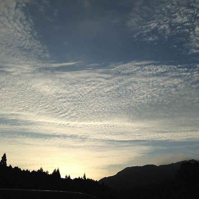 今日もひんやりとした朝です。ウロコ雲が出てますので雨が近づいでます!