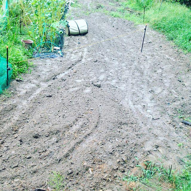 雨が降り続き完全に畑は通行禁止です!ハウスの中で作業です。