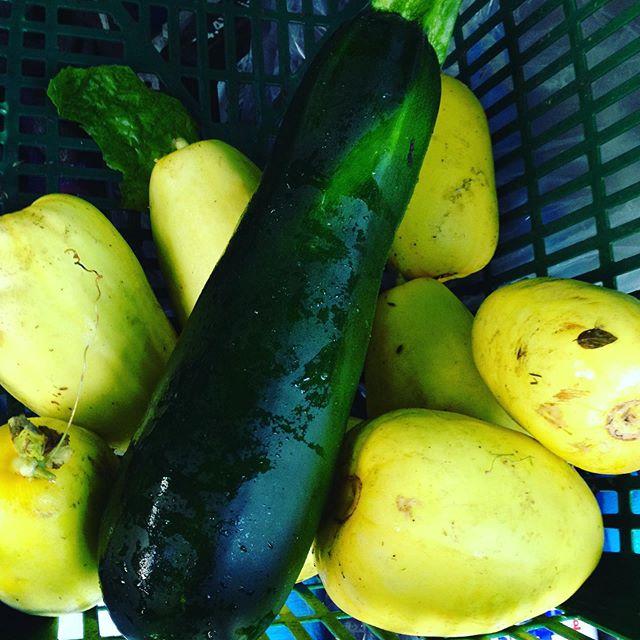後半のズッキーニは、数が取れませんので希少 マクワ瓜は、気温変化に左右されているので、早めに収穫してますので、追塾して下さい。