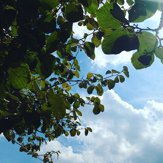 マンサクの木の下から残暑の雲を眺めて昼休み