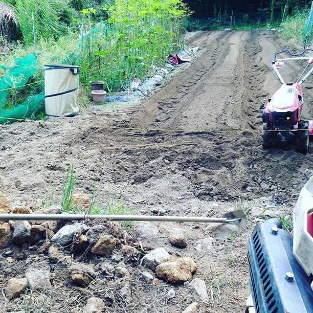 来年6月に収穫予定の4ベット準備!毎日来年春、初夏様に畑を作ってます。
