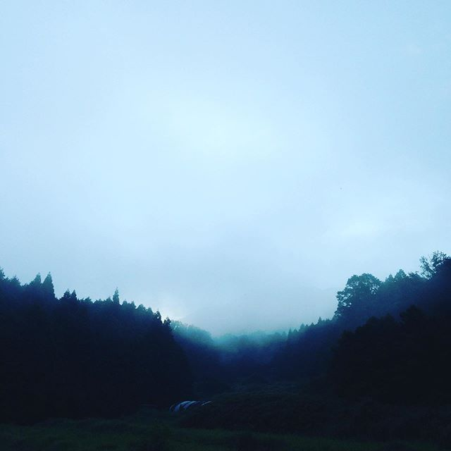 昨日より朝の気温が高く23度で、霧が出てきました
