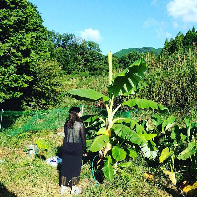親戚達と畑の見学!バナナの大きさがわかる