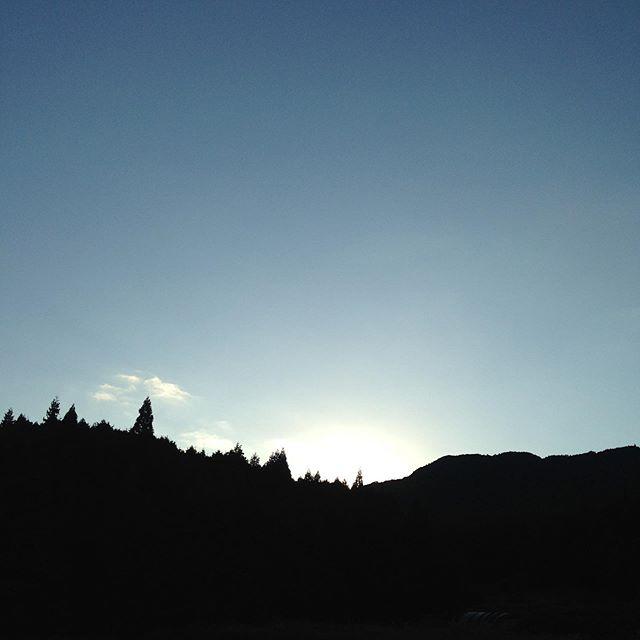 朝の気温が20℃になりました!天候は快晴からの収穫スタートです!