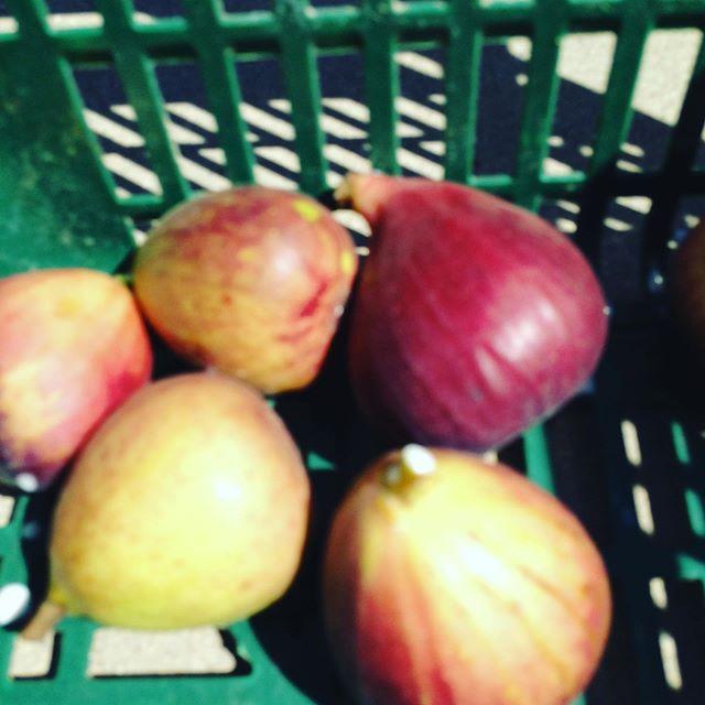 ジャボチカバとフルーツトマト、マクワセットやイチジクなど2便13時発で出荷