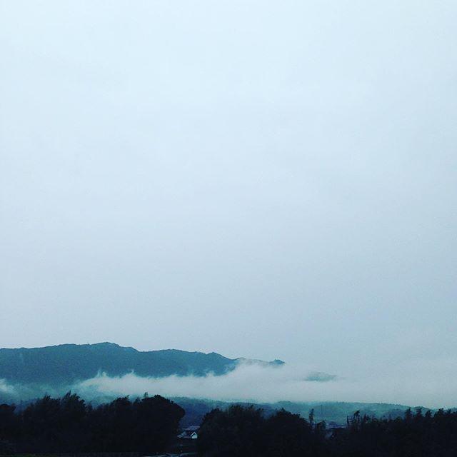 雨が降り続いて畑は霧がかかってます。