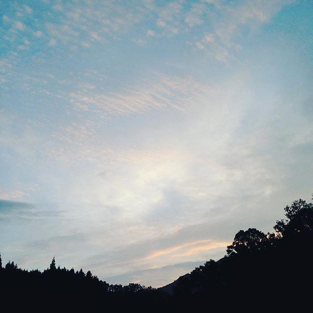 昨日より2℃高い18℃で、鱗雲が西から東に流れて昼から雨の予報だそうです。台風の予報は、かなり昨日とは変わってきましたので、警戒しながら朝の収穫してます。