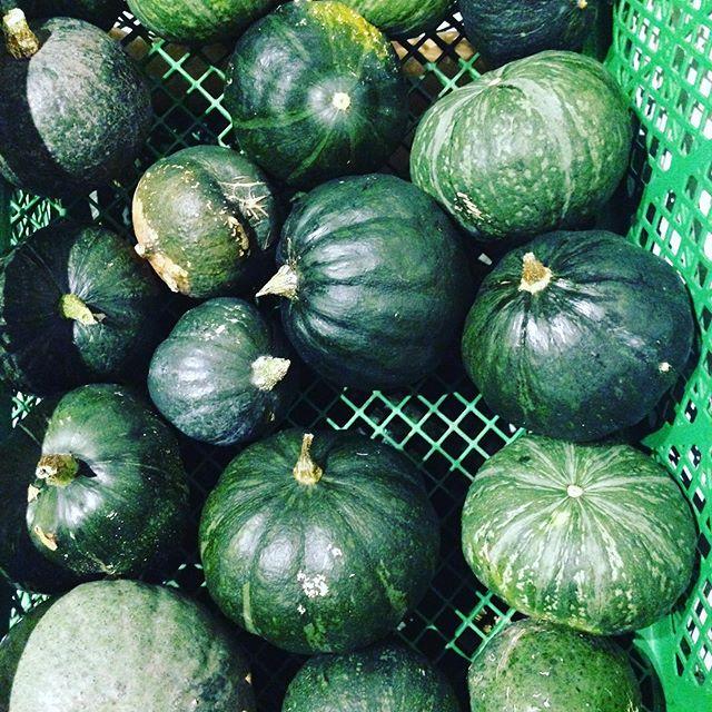 スイーツにぴったりのかぼちゃは、やはり春植えより夏植えのが糖度がまるで違いました!寒暖の差は大事ですね