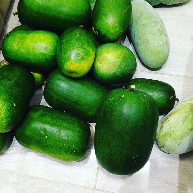 10月までに収穫が終わった冬瓜です!ギリギリまで育てました!高級品に加工します。動画で紹介しますね〜出荷もします。