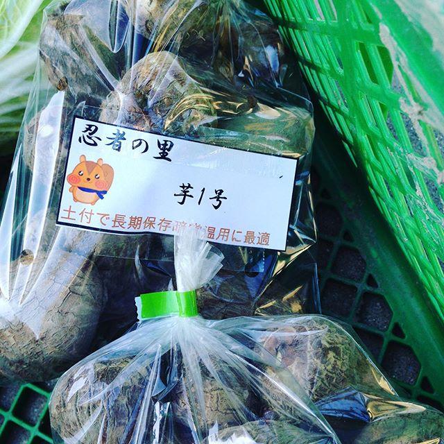 やっといい感じに乾燥で、次の里芋ができました!忍者の里芋 土付き長期保存鮮度維持の1号!