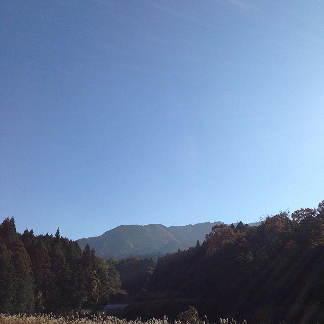朝の気温は10℃現在14℃日中は20℃予報で快晴です!秋の青い空が印象で、紅葉が見頃です!